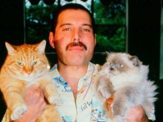 Freddie Mercury con Oscar y Tiffany