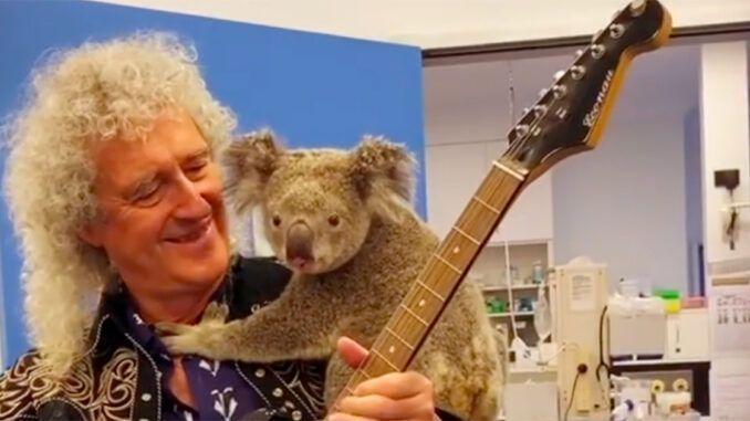 brian may koala australia